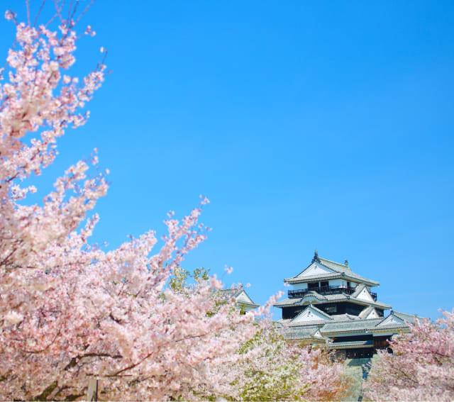 시코쿠 세토 우치 마쓰야마 | 마쓰야마 공식 관광 웹 사이트