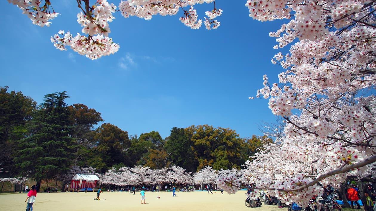 도고공원(유즈키성 유적지)